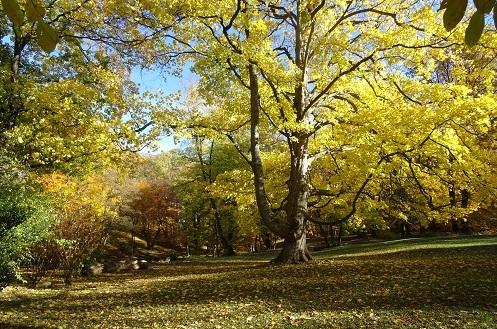 Schlosspark Ilsenburg