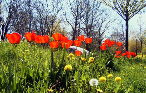 [Translate to Englisch:] Frühling in Ilsenburg